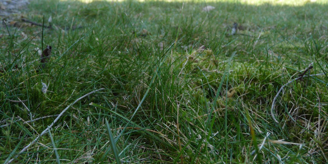 """Redewendungen zum Thema """"Gras""""… Teil 1"""
