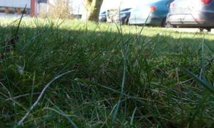 Der Rasen-Mäher mit seinem Rasenmäher