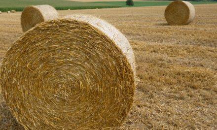 Trockenheit und Dürre: Wenn grüner Rasen das Zeitliche segnet
